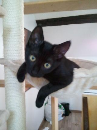 ALKALINE - 3 mois - Femelle noire Wp_00079