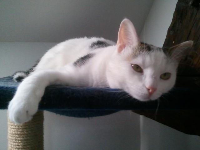 MELODIE - 2 ans - Femelle blanche et marbrée marron Wp_00100