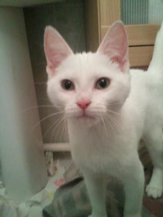 FREYA - 4 mois - Femelle blanche Wp_00115