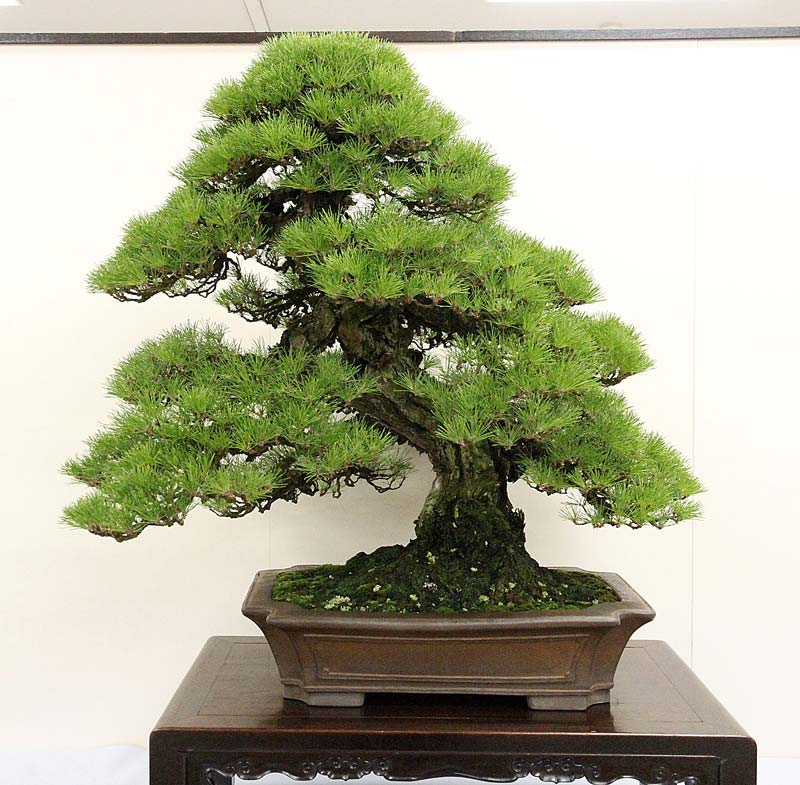 2012 KOKUFU BONSAI EXHIBITION REPORT 98-1-c10