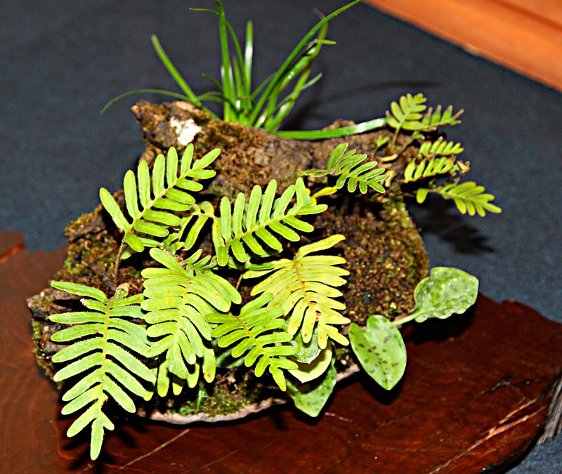 OFFICIAL 3RD US NATIONAL BONSAI EXHIBITION RESULTS Compan10