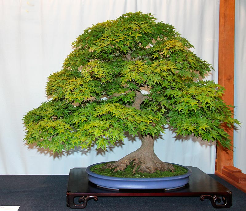OFFICIAL 3RD US NATIONAL BONSAI EXHIBITION RESULTS Finest10