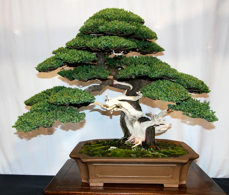 OFFICIAL 3RD US NATIONAL BONSAI EXHIBITION RESULTS Finest11