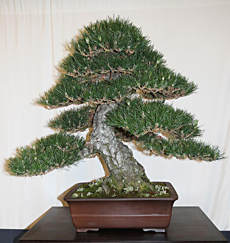 OFFICIAL 3RD US NATIONAL BONSAI EXHIBITION RESULTS Finest12