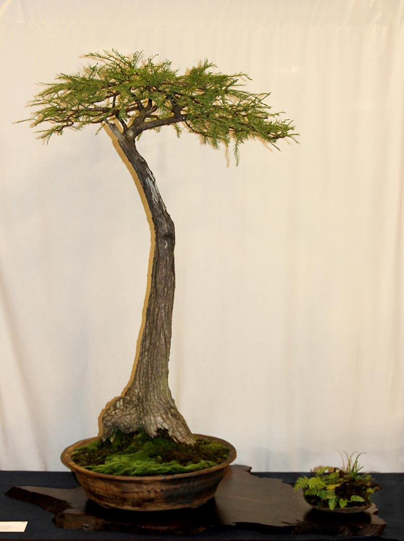 OFFICIAL 3RD US NATIONAL BONSAI EXHIBITION RESULTS Finest13