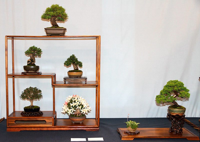 OFFICIAL 3RD US NATIONAL BONSAI EXHIBITION RESULTS Finest14