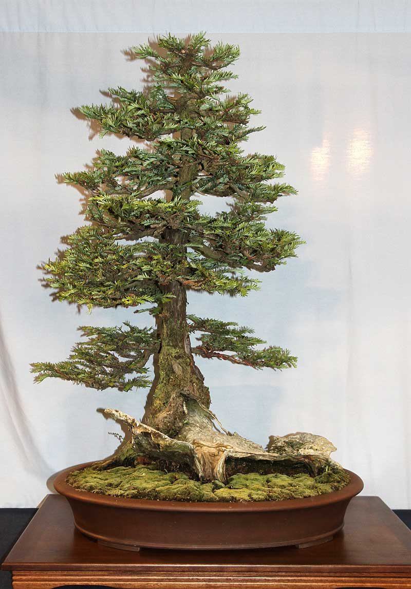 OFFICIAL 3RD US NATIONAL BONSAI EXHIBITION RESULTS Finest15