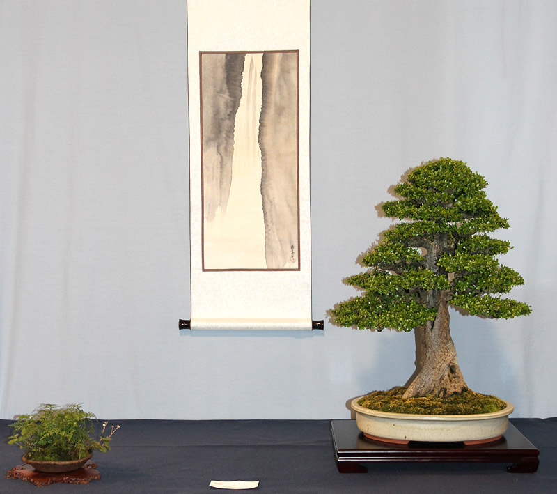 OFFICIAL 3RD US NATIONAL BONSAI EXHIBITION RESULTS Finest16