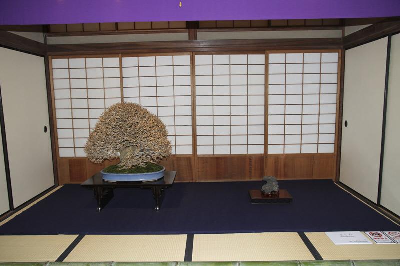 ASPAC Takamatsu Japan 2011 and BCI Tour  - Page 3 Pomegr11