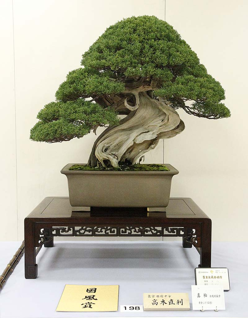2012 KOKUFU BONSAI EXHIBITION REPORT Shimpa11