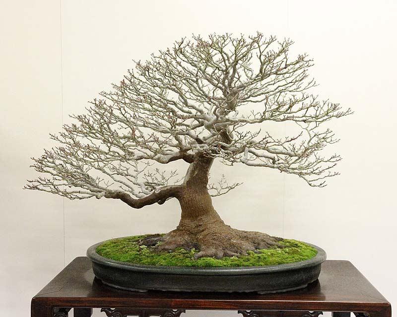 2012 KOKUFU BONSAI EXHIBITION REPORT Shishi17