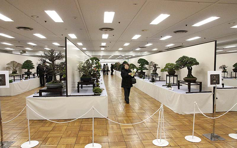 2012 KOKUFU BONSAI EXHIBITION REPORT View-210