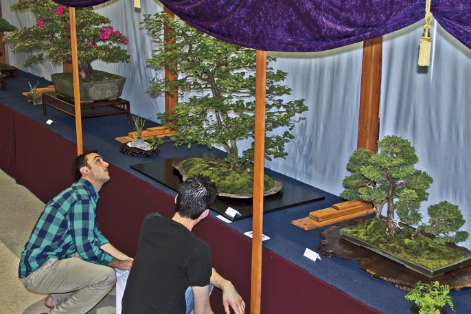 SUBMIT PHOTOS FOR US NATIONAL BONSAI EXHIBITION View-310