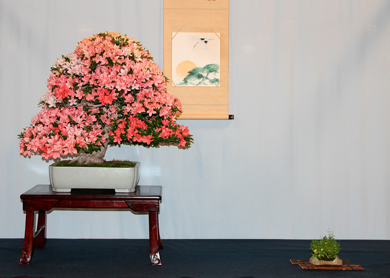 OFFICIAL 3RD US NATIONAL BONSAI EXHIBITION RESULTS Yoshim11