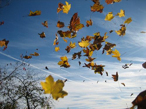Vents de novembre Le_ven10