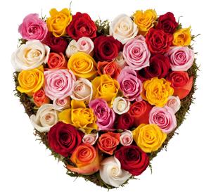 Elle avait… Roses11