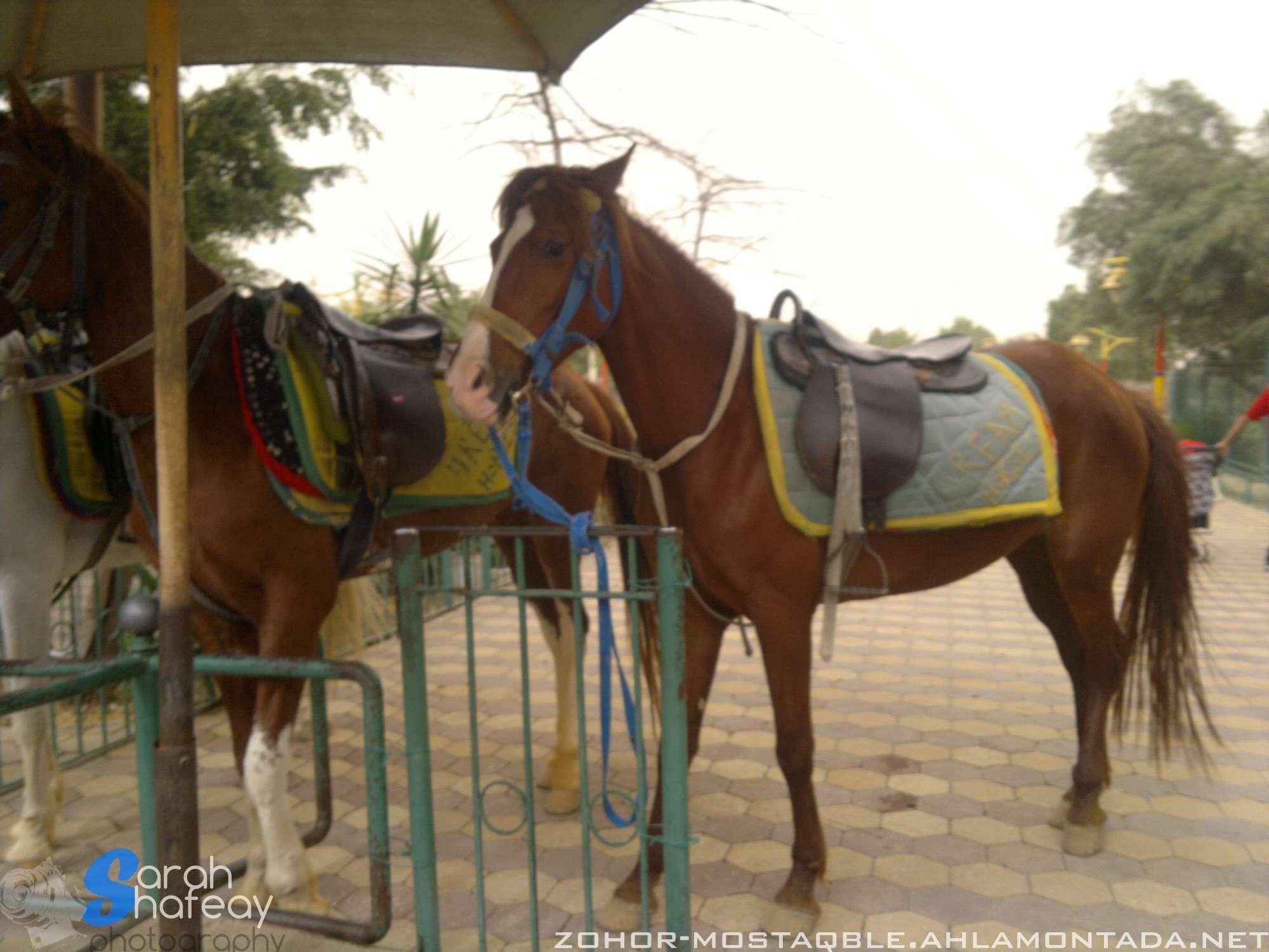 صور رحلة الصف الأول الثانوي إلى دريم بارك (18/4/2012) 810