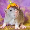 Les ratons de série Z de DTC-IND Princess Carwash et IND Feirefiz ! 00aero10