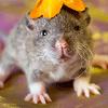 Les ratons de série Z de DTC-IND Princess Carwash et IND Feirefiz ! 00dar110