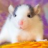 Les ratons de série Z de DTC-IND Princess Carwash et IND Feirefiz ! 00dyna10