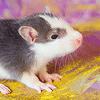Les ratons de série Z de DTC-IND Princess Carwash et IND Feirefiz ! 00glen10
