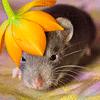 Les ratons de série Z de DTC-IND Princess Carwash et IND Feirefiz ! 00lady10