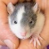Les ratons de série Z de DTC-IND Princess Carwash et IND Feirefiz ! 00toxi10