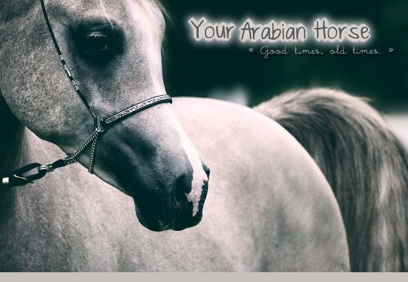 Your Arabian Horse