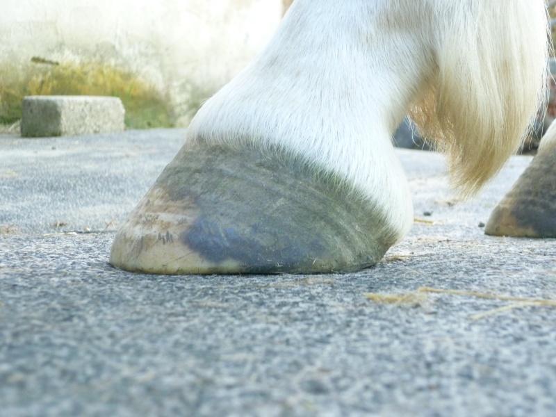 Les pieds-pieds a Tam-Tam^^photos P1020112