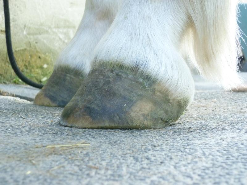 Les pieds-pieds a Tam-Tam^^photos P1020115