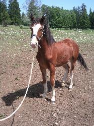 coup - Le cheval influençable ou coup de chance ? Rr1012