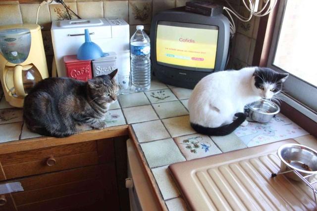 Minouchette, chatte de 2 ans abandonnée pendant un déménagement (77)) Minou-10