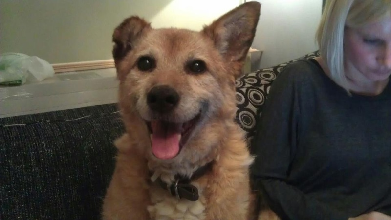 Fred needs a home  Fred_j10