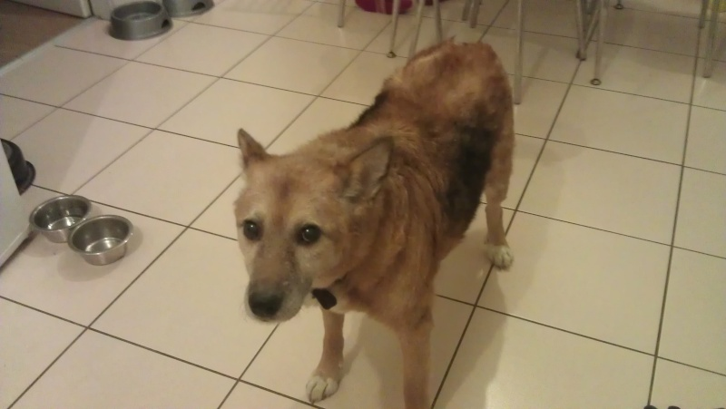 Fred needs a home  Freddy12