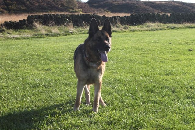 Max 7/8 yr old, a gentleman  Max2re10