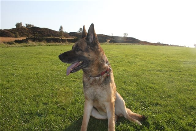 Max 7/8 yr old, a gentleman  Max3re10