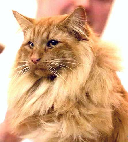 Portrait de chat . Faune Chat_n10
