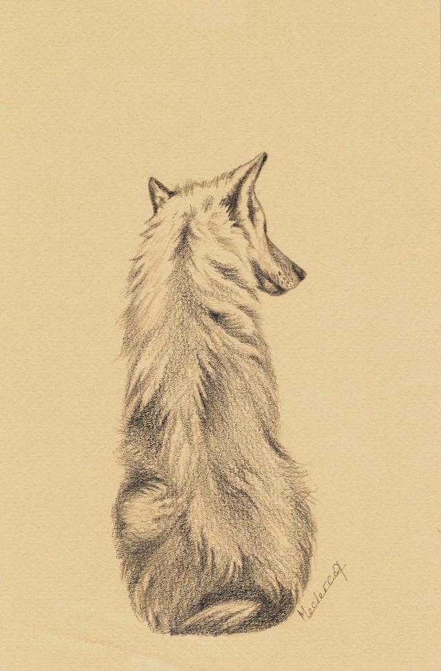 Loups (de moi pas de Nicolas Vanier).... Graphi10