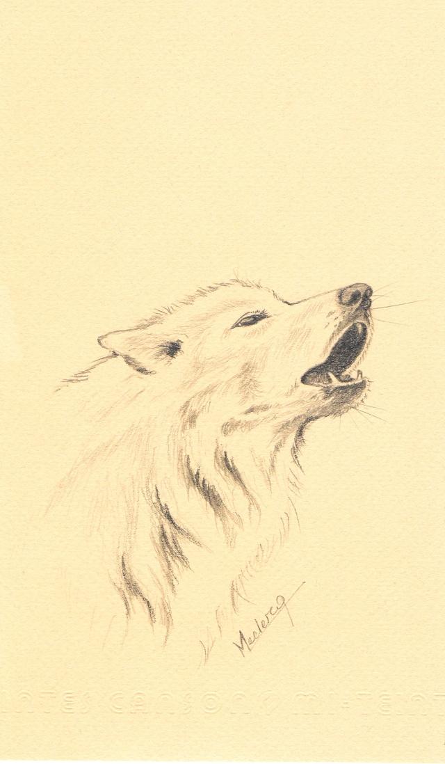 Loups (de moi pas de Nicolas Vanier).... Graphi11