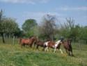 ANNONCES chevaux à adopter