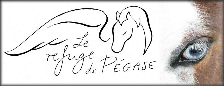 Association Sauvetage Chevaux Picardie - Le Refuge de Pégase FERMEE