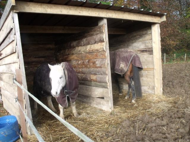 TRIVOLITE dite TULIPE - poney née en 1985 - adoptée en mai 2012 par Malou50 - Page 2 Les_cr10