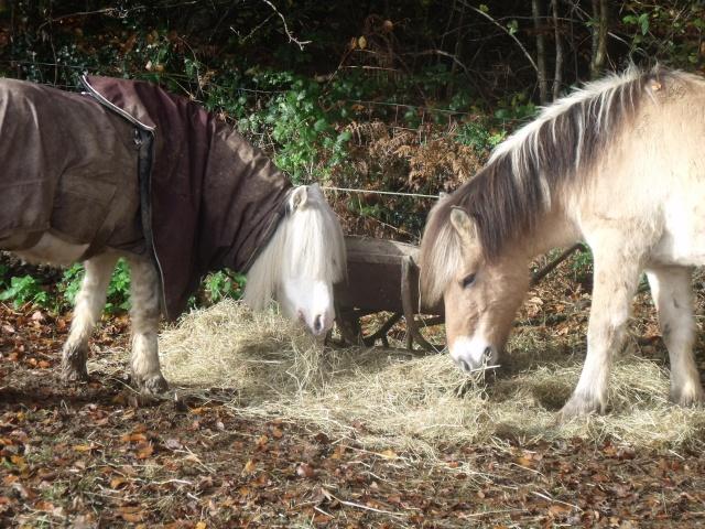TRIVOLITE dite TULIPE - poney née en 1985 - adoptée en mai 2012 par Malou50 - Page 2 Les_cr11