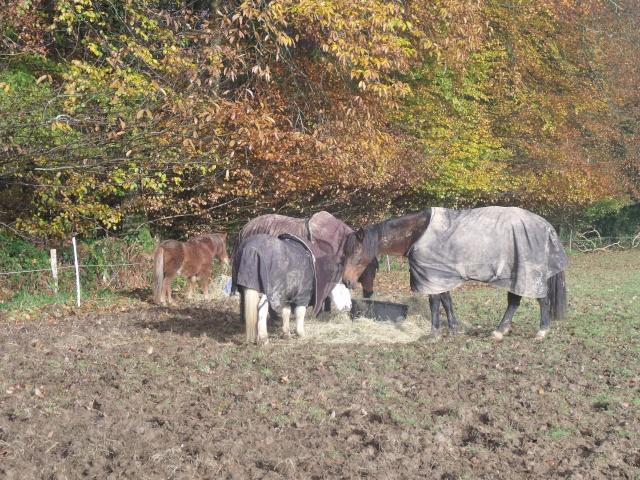 TRIVOLITE dite TULIPE - poney née en 1985 - adoptée en mai 2012 par Malou50 - Page 2 Les_cr12