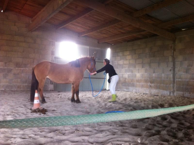 Travail à pied avec Sultane coachté par LangeDeLenfer237 Img_1036