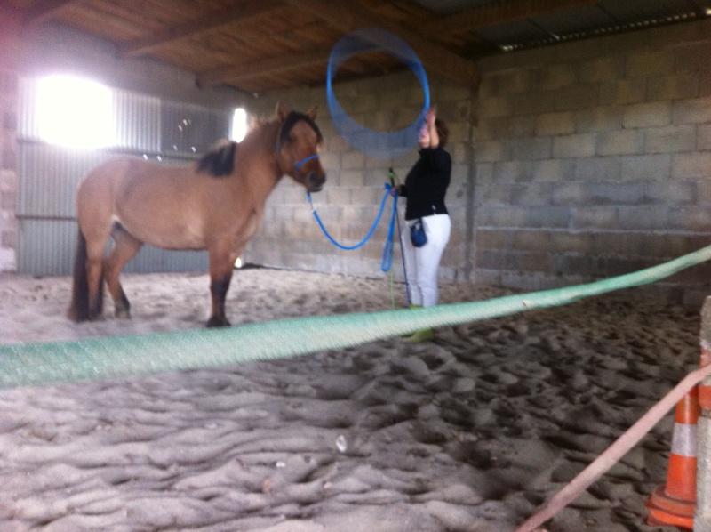 Travail à pied avec Sultane coachté par LangeDeLenfer237 Img_1037
