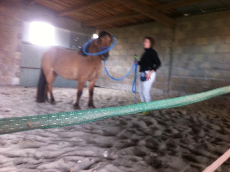Travail à pied avec Sultane coachté par LangeDeLenfer237 Img_1038