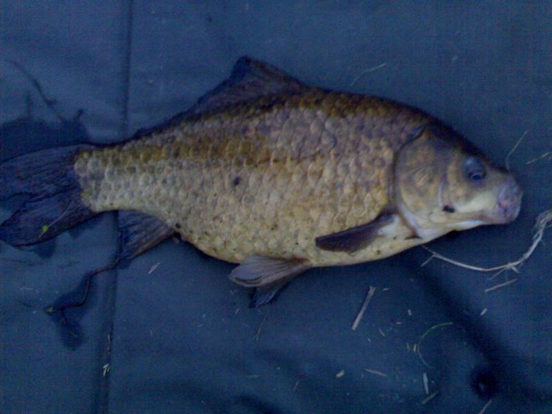 Petit jeu, identification d'un poisson. 15082010
