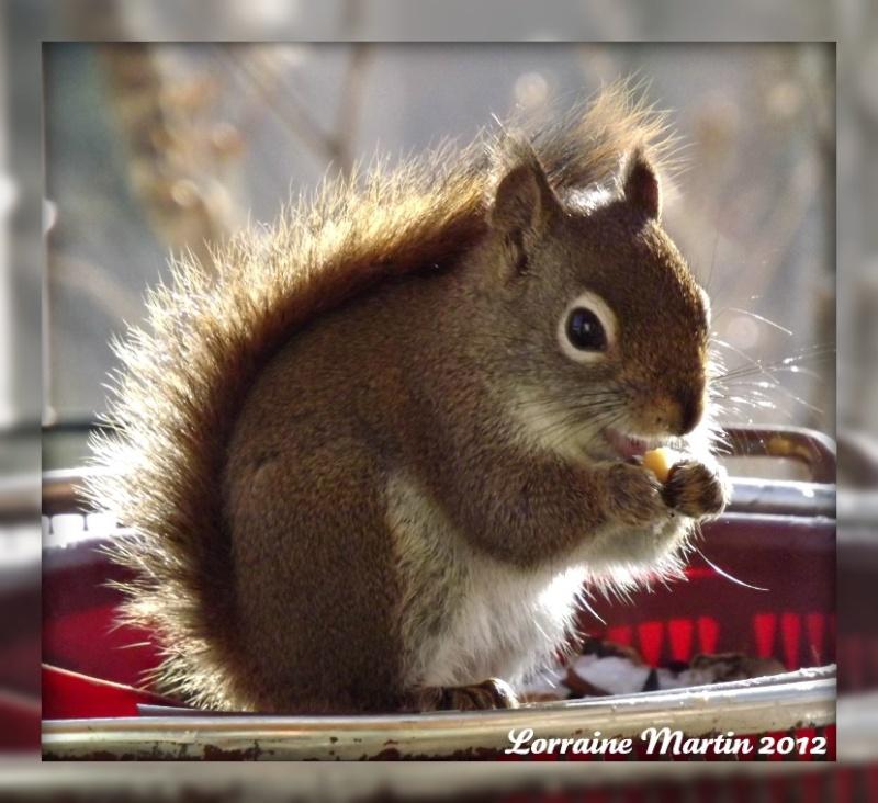 Est-ce un écureuil roux?? Merci! Dscf2073