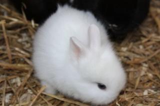 Bunny rescue! Kanin10